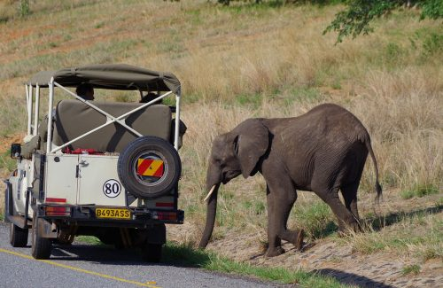 luxury-travel-adventures-africa-safari-3