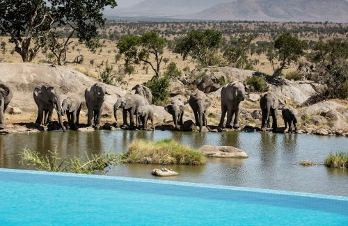 luxury-travel-adventures-africa-safari-background4